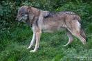 Wolf101019134904